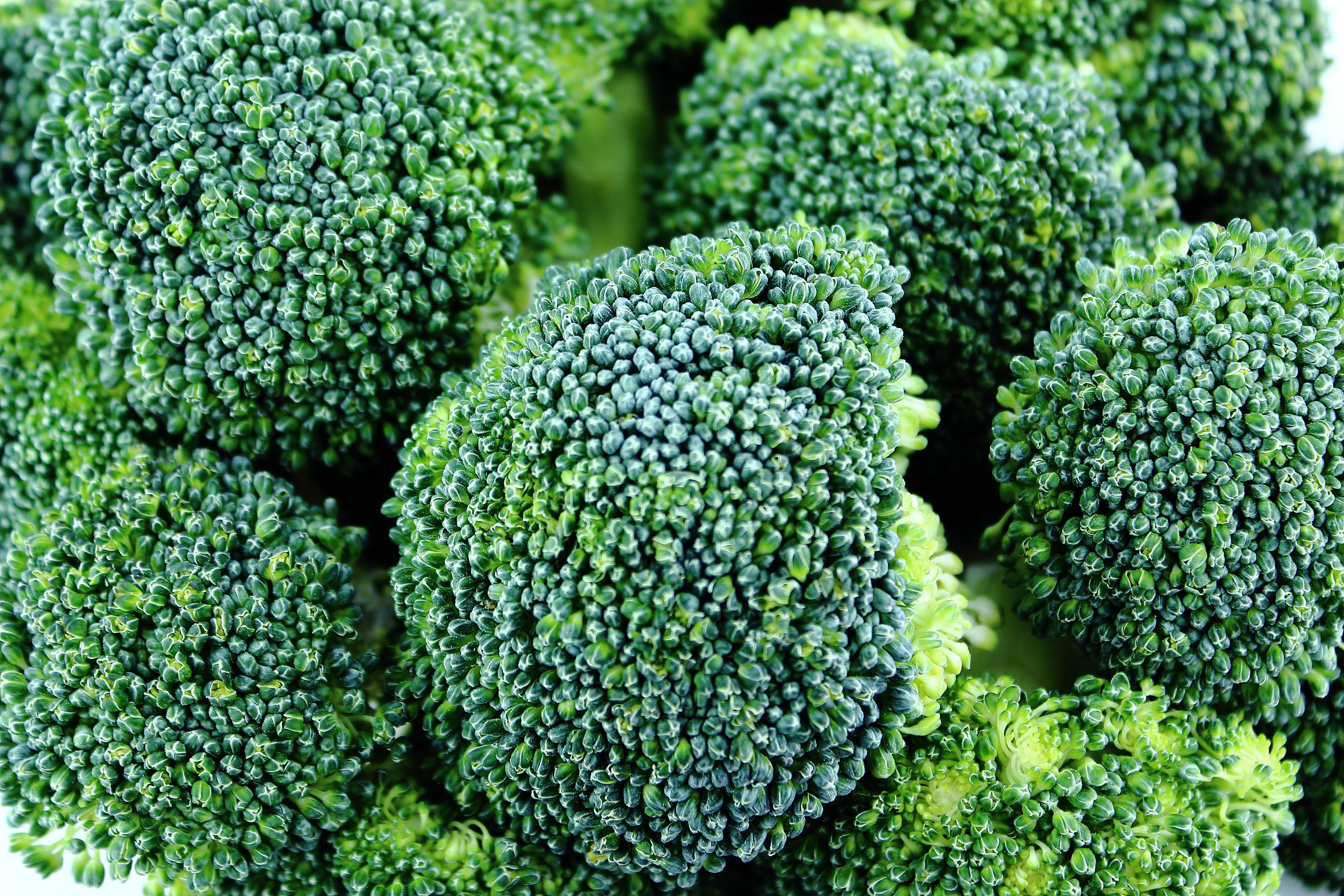 Brocolii