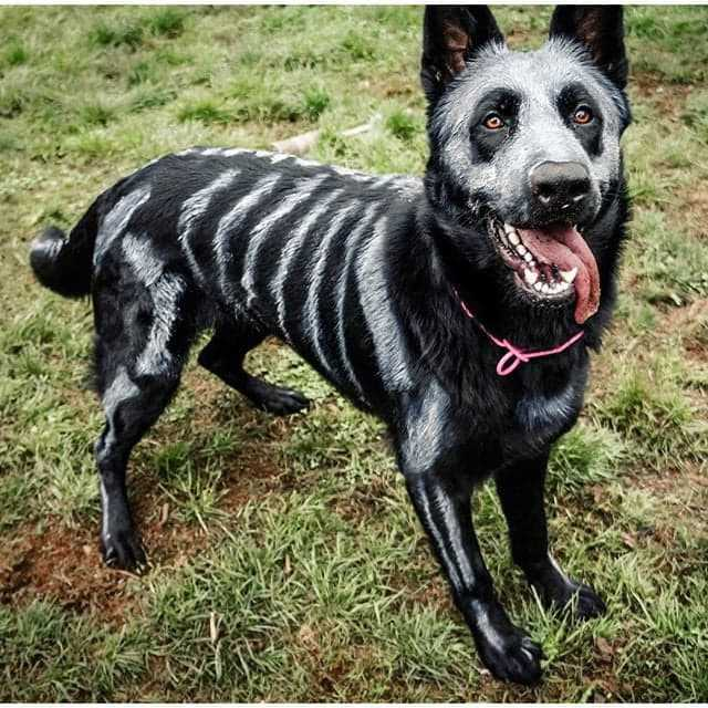 diy-halloween-costumes-dogs