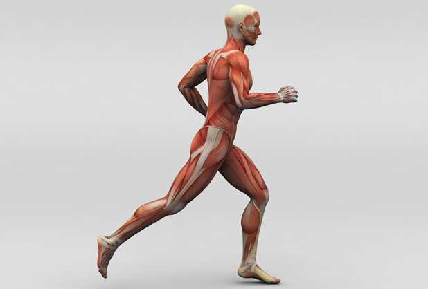 Lala 100 Musculos-sanos